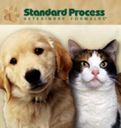 standard-process-kitten-puppy