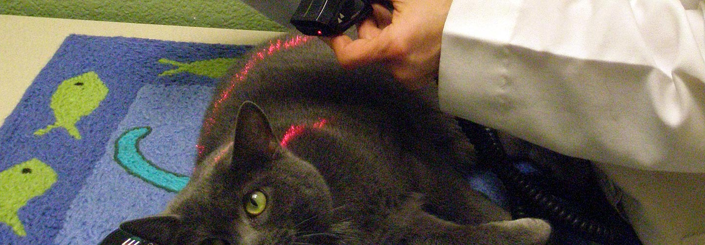 cat-laser-treatment-banner